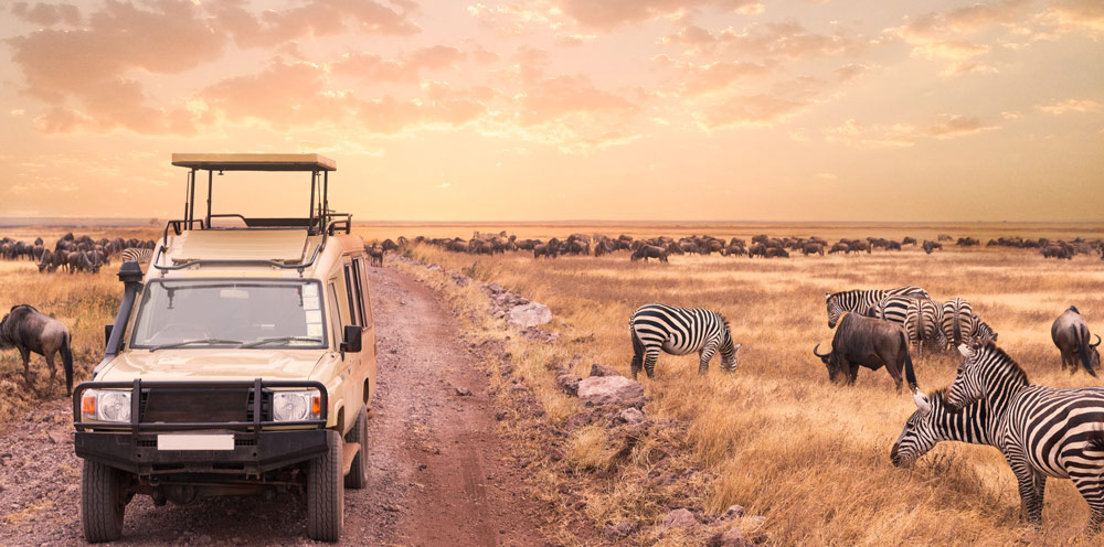 Discover Tanzania with us