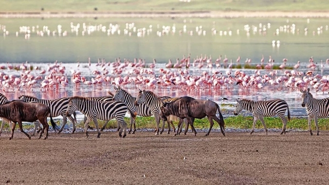 destination-lake-manyara-038-ngorongoro-tanzania-1200x675_Easy-Resize.com