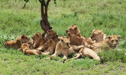 """7 days Luxury Safari Tour """"Wildlife and Culture Tour"""""""